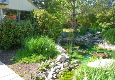 Utah water gardens aquatic nursery and koi for Koi pond builders east rand